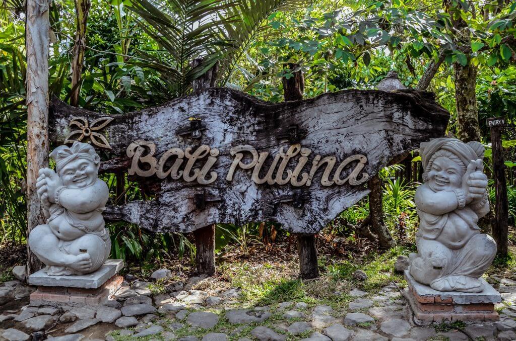 Bali Pulina coffee plantation in Bali