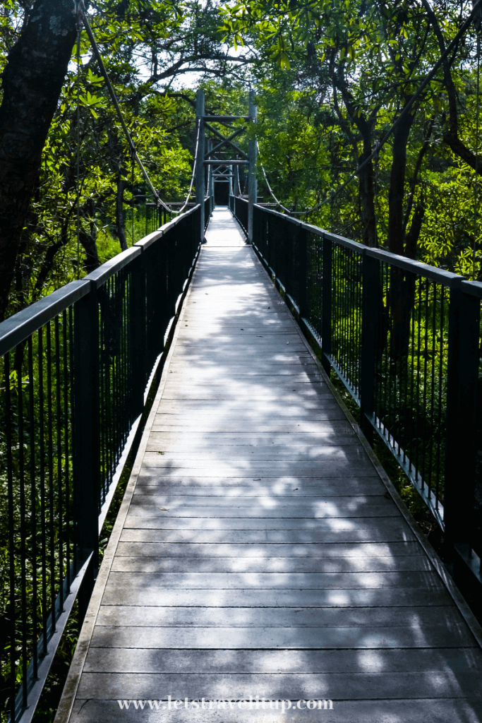 The hanging bridges located in the botanical gardens in Mpumalanga, South Africa